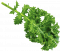 kisspng-parsley-lettuce-leaf-vegetable-hydroponics-grow-li-5b1b5f702b8149.8731542315285205601782