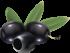 olives_PNG14316